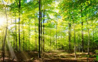 Assurance forêts